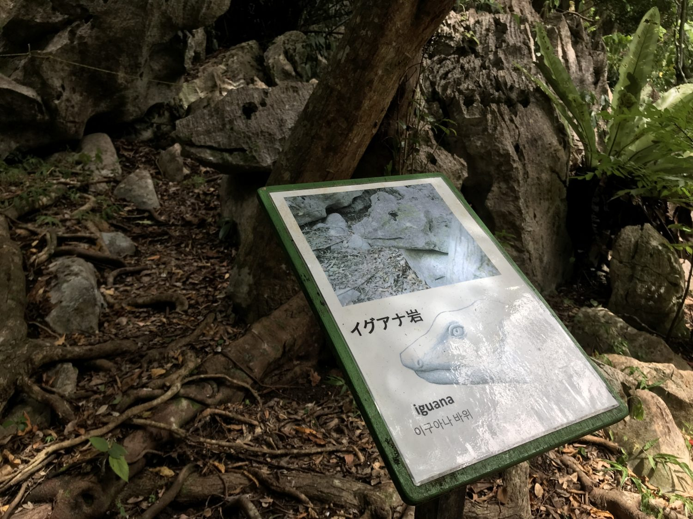 大石林山の所々に「何かに似ている岩」が隠れています。