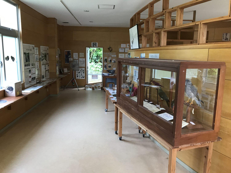 ヤンバルクイナをはじめ、やんばる地域に住む鳥の剥製なども展示されています。