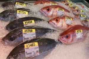 糸満漁協の『糸満お魚センター』で魚貝類を愛でる